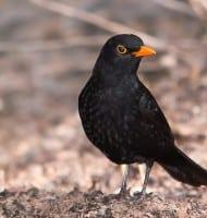 Schrijf je gratis in voor de Nationale Tuinvogeltelling!