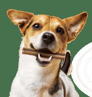 Gratis Pedigree DentaStix voor jou hond!