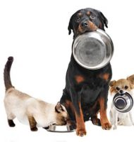Bij Intratuin gratis dierendagontbijt + goodiebag!