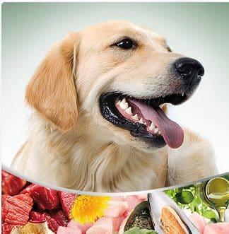 Wil je hond een gratis proefpakket van ImperialFoodhondenvoeding proberen?