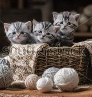 Gratis Kitten geboorte box met kittenvoeding