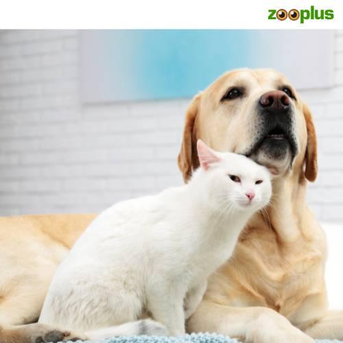 Zooplus actie | Gratis Snacks voor je hond of kat