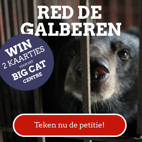 Red de Galberen en 2 kaartjes voor Felida Big Cat Centre