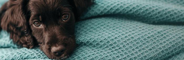 Gratis cadeaukaart bij een Dierenverzekering