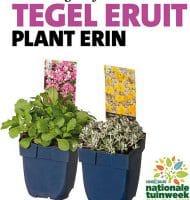 Gratis tuinplant voor een tuintegel