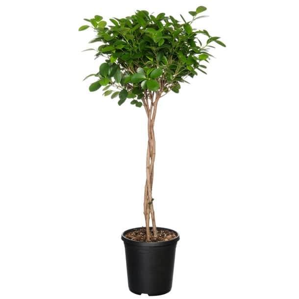 Gratis Online Plantencursus bij Intratuin